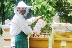 Alles über Bienen & Honig - Besuch bei einer Frankfurter Bio-Imkerei