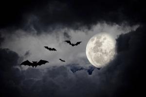 Vampire, Werwölfe & Scheintote - Friedhofsgruseln zwischen Legenden & Wirklichkeit