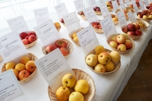 Der Palmengarten & der Apfelbaumhain - Inklusive Ticket zur Messe