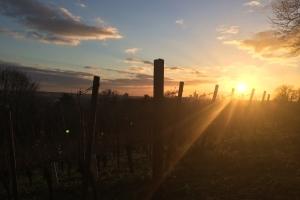 Vinophile Führung auf dem Lohrberg - Frankfurter Wein bei Mondschein entdecken & probieren