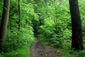 Faszination Wald - Exkursion in den Frankfurter Stadtwald