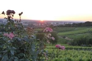 Weck, Worscht & Woi - Kulinarische Erlebniswanderung mit Weinprobe an der Strata Montana