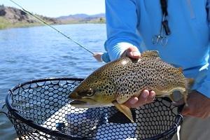 Fischers Fritz fischt frische Fische - Kulinarische Tour rund um die Seligenstädter Fischer