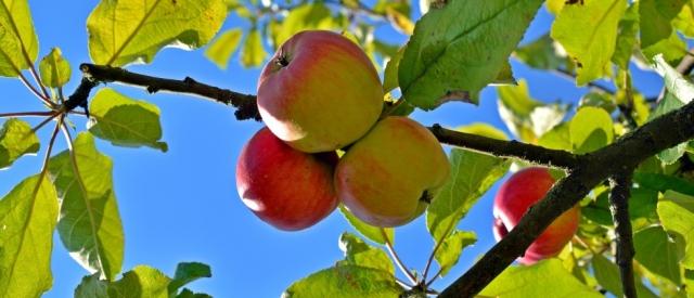 Der Palmengarten & der Apfelbaumhain